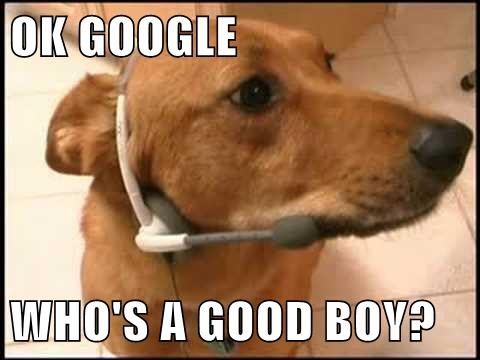 dogs funny google glass