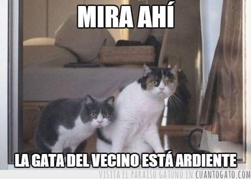 gatos Memes animales - 8071956480