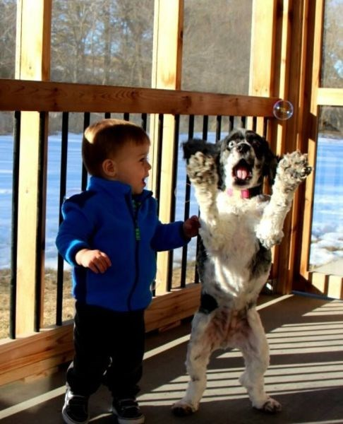dogs kids cute parenting - 8072142336
