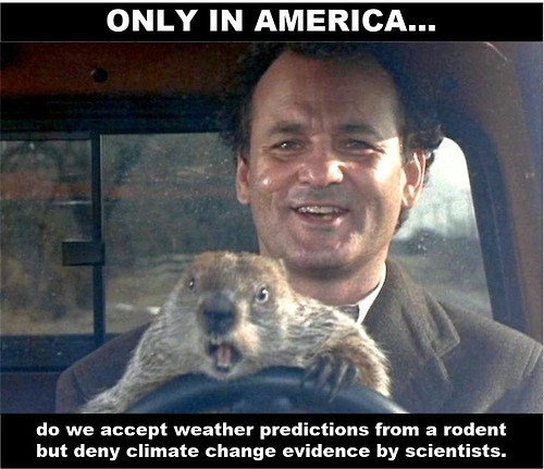 bill murray,weather,groundhog day,punxsutawney phil