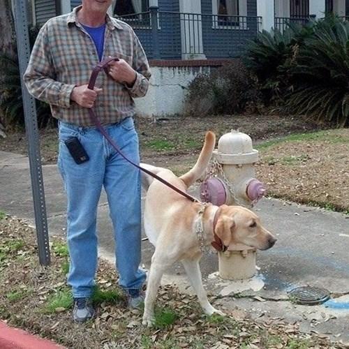 perros animales fotos - 8072352768