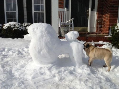 dogs snow sniff funny - 8072372736