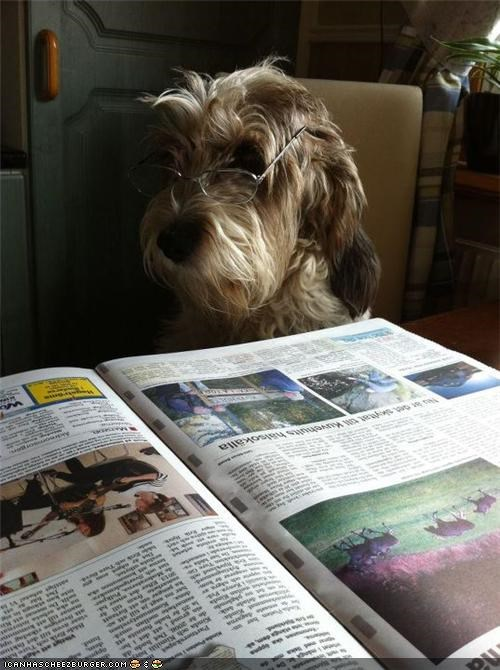 dogs,morning paper,glasses,funny