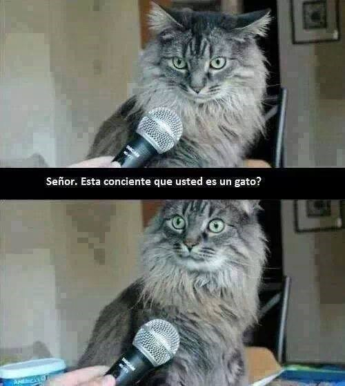 gatos Memes animales - 8072402176