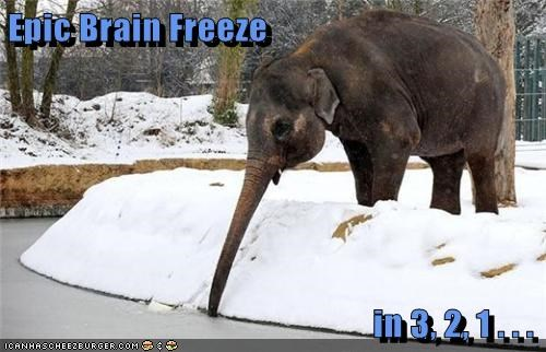 drink,brain freeze,elephants,funny