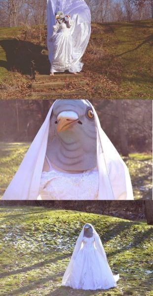pigeon,poorly dressed,mask,wedding dress