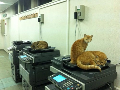 Every Office Needs a Few Cats For the Copy Room