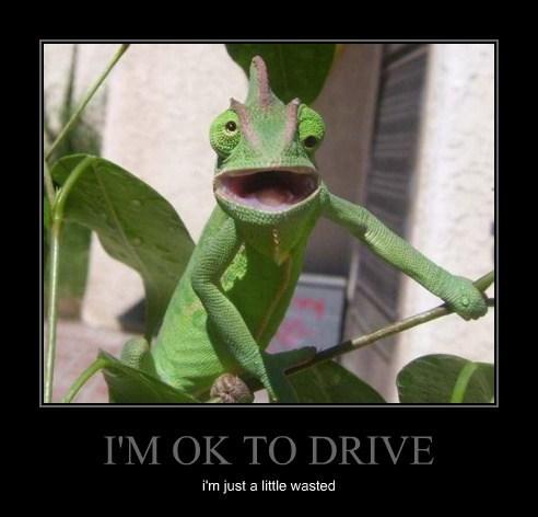 dizzy drunk chameleons funny - 8072446720