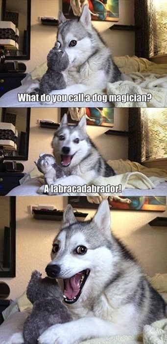 dogs jokes puns magicians funny - 8072538624
