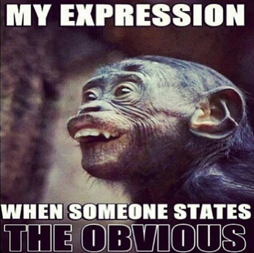 obvious apes funny stupid - 8072585472