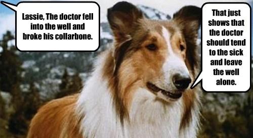 jokes puns lassie funny - 8072880640
