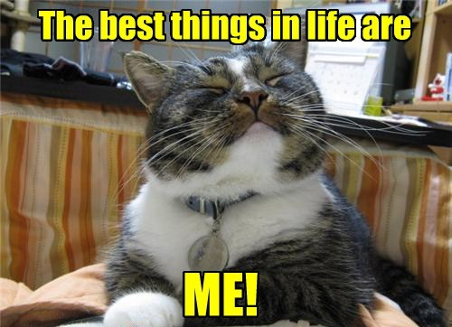 conceited cute Cats funny - 8072904960
