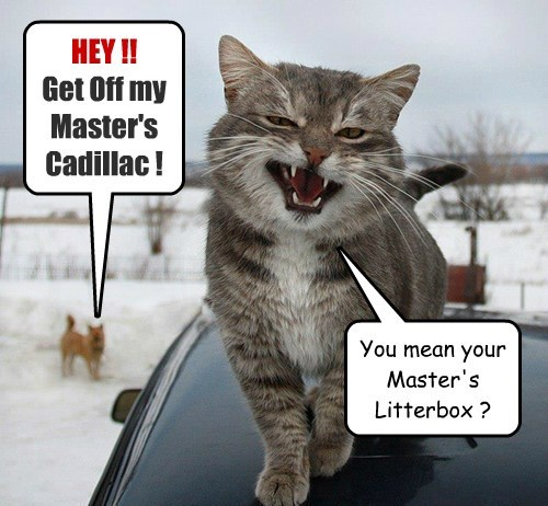 cars message litter box Cats funny - 8073351680