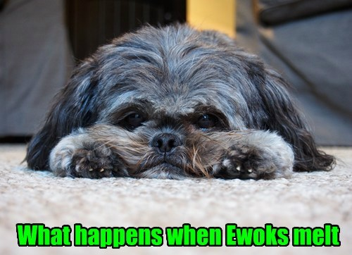 ewoks dogs star wars melt funny - 8073883136