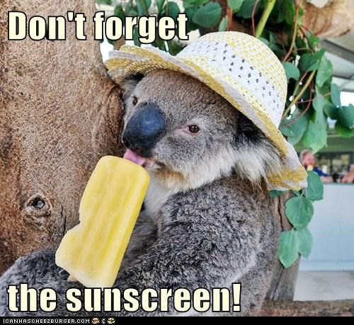 popsicle,summer,koalas,sunscreen