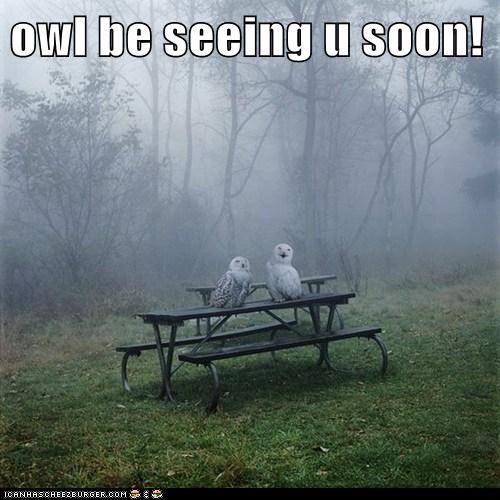 puns owls fog funny - 8074004992