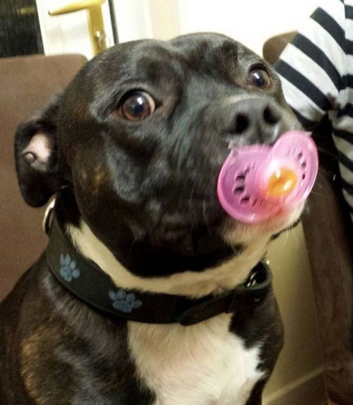 dogs pacifier parenting - 8074008064