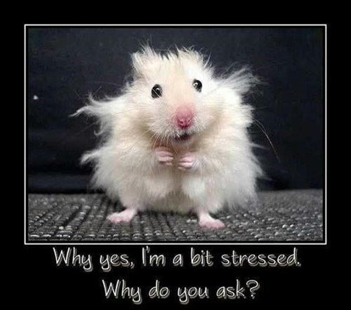 furniture stressed funny animals mouse - 8074046464
