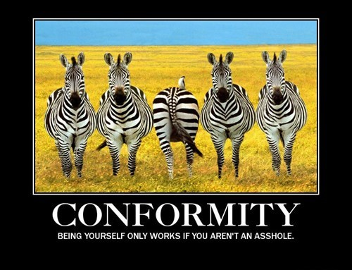 animals conformity idiots zebra - 8074106112