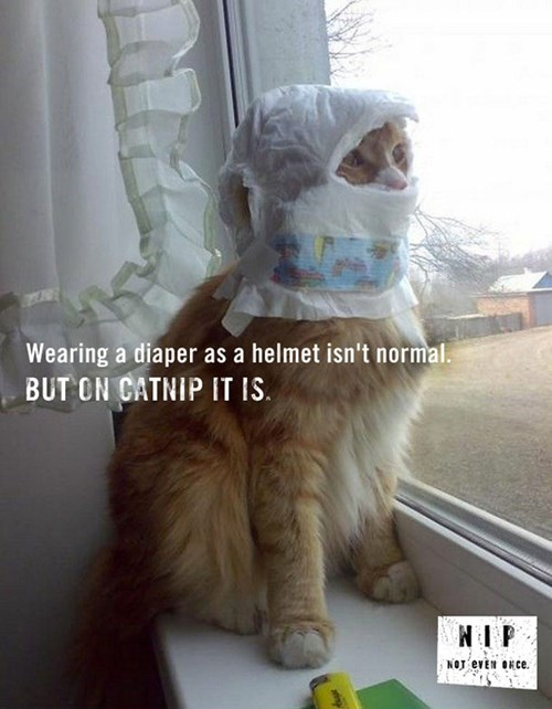 Cats crazy catnip drugs diapers funny - 8074249728