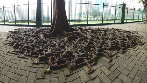 mother nature ftw tree roots g rated win - 8074316032