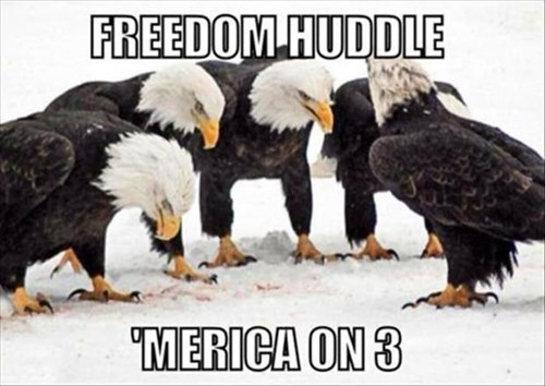 eagles murica eagles football