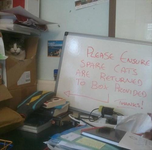 boxes if i fits i sits Cats - 8074639872