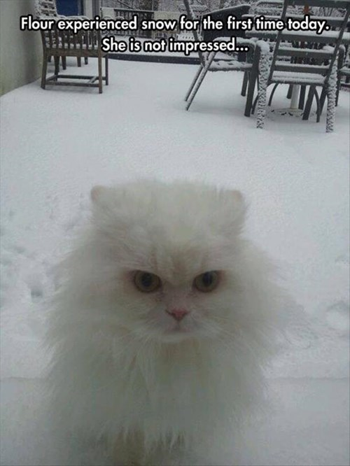 snow cold winter Cats funny - 8074640896