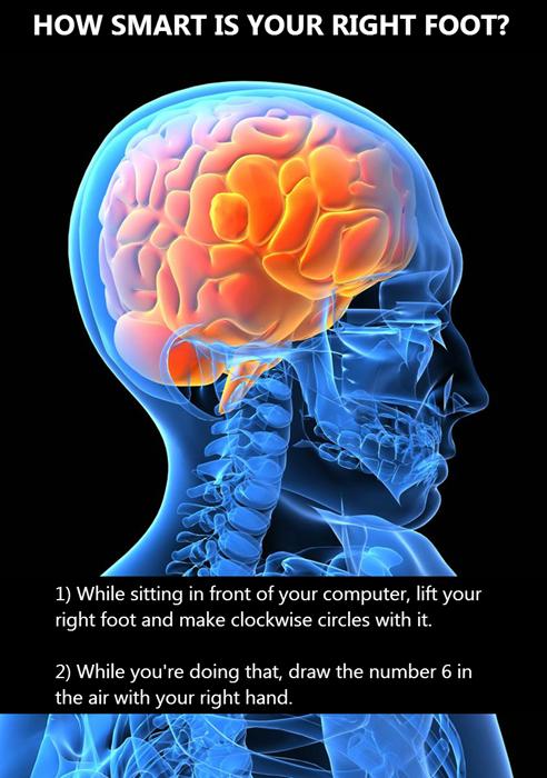 brain tricks mind tricks brain - 8074643712