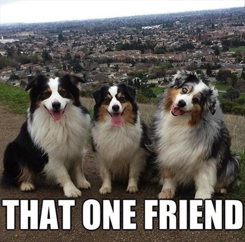 dogs friends funny - 8074643968