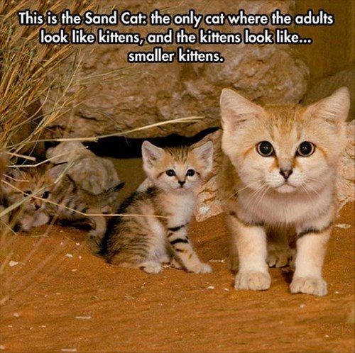 An Adult Kitten?  I Can Die Happy...