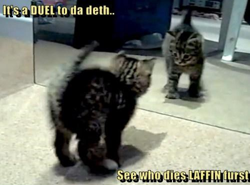 kitten,reflection,cute,fight,funny