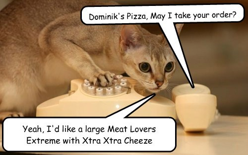 pizza phone cute Cats funny - 8075015424