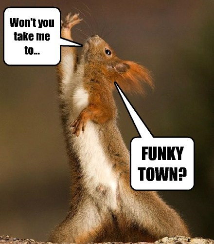 Music,disco,puns,squirrels,dance,funny