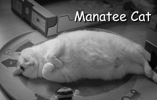 manatee Cats funny - 8075101184