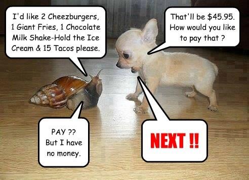 Cheezburger Image 8075102976