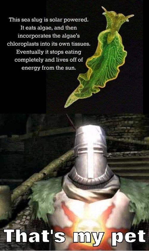 slugs dark souls - 8075402752