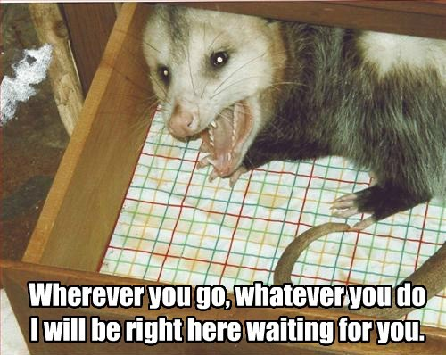 possums,danger,creepy,protect