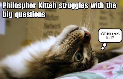 Cats,funny,philosophy,noms