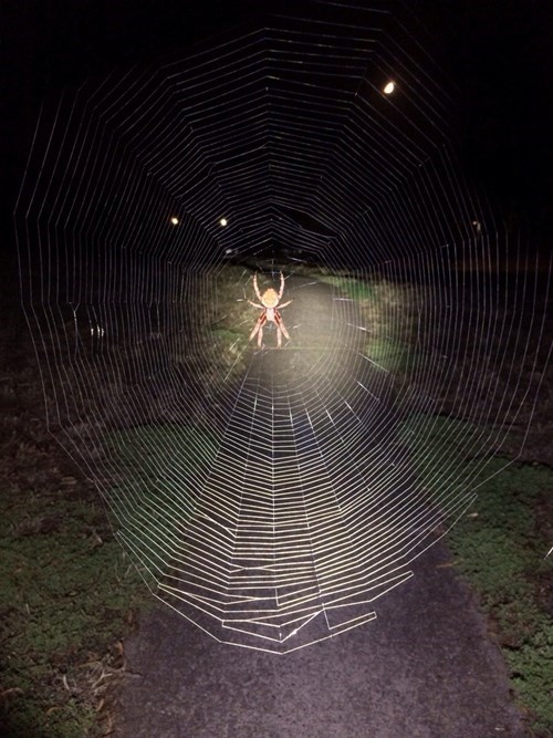 spiders nope Photo - 8075649024