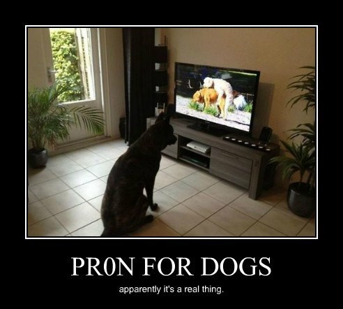 dogs,pr0n,funny,animals