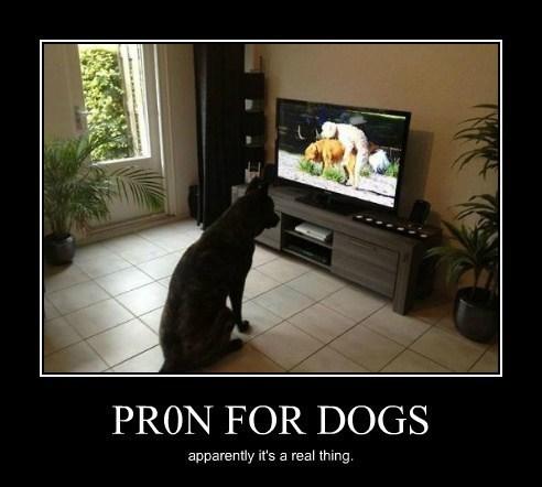 dogs pr0n funny animals - 8075649792