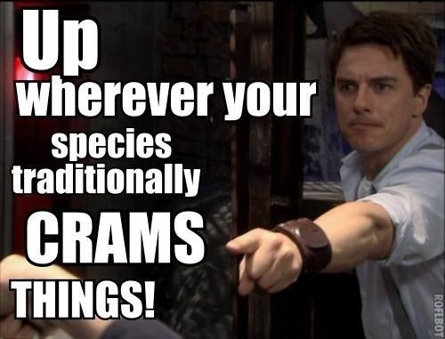 Captain Jack Harkness,Torchwood,translation