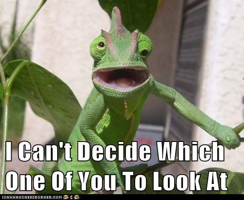 chameleon,eyes,funny,lizards
