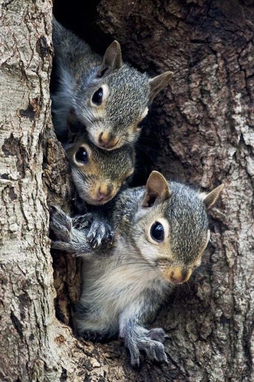 cute,squirrels,three