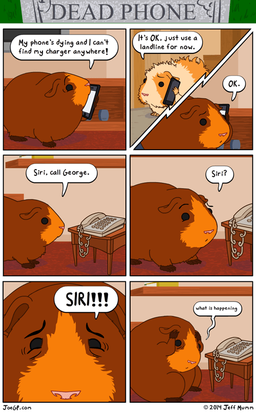 phones,guinea pigs,web comics