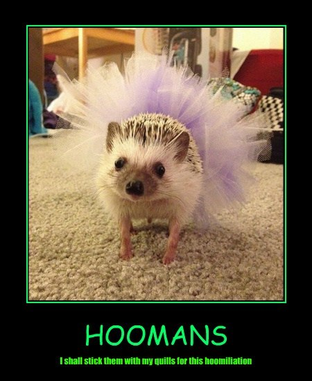 embarrassed,hedgehogs,tutu