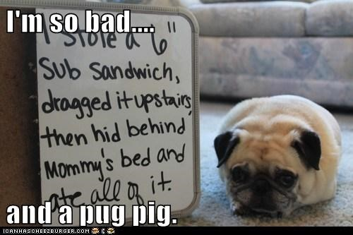 steal,cute,pugs,shame,sandwich