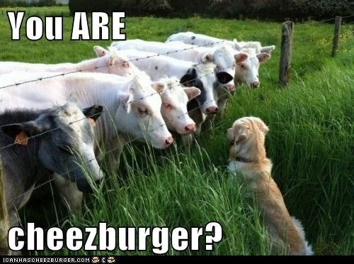 dogs,cheeseburger,cows