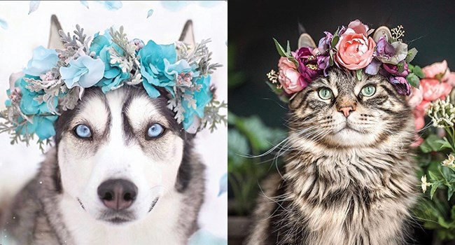 flowers crowns animals - 8077573
